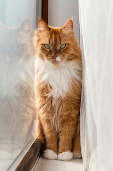 Hermoso gato naranja junto a la ventana