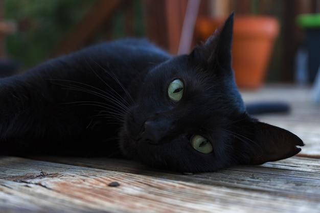 Hermoso gato negro con ojos verdes mirando a la cámara