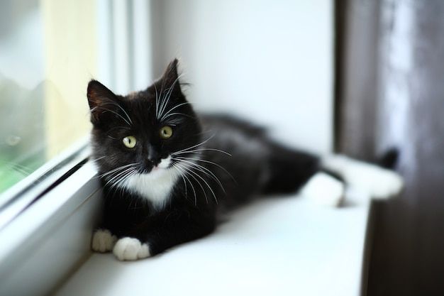 Hermoso gato negro perezoso acostado junto a la ventana