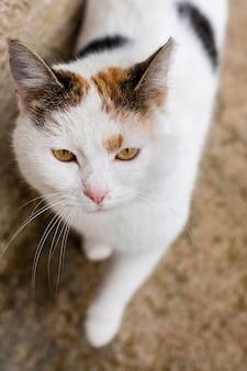 Hermoso gato con pelaje blanco y ojos verdes.