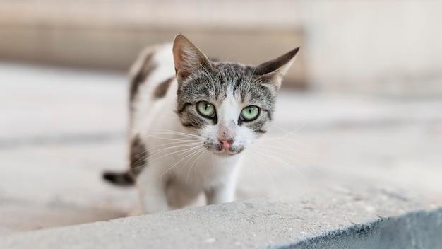 Hermoso gato sentado al aire libre sobre pavimento