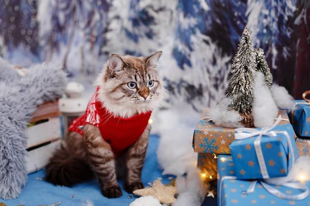 Hermoso gato con un suéter rojo sentado entre los regalos con un bosque de nieve como