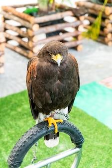 Hermoso halcón en zoológico