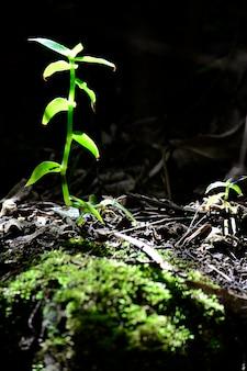 Hermoso halo luminoso ramita verde