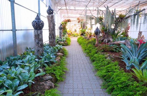 Hermoso jardín en invernadero