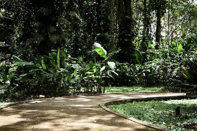 Hermoso jardín tropical de tiro largo