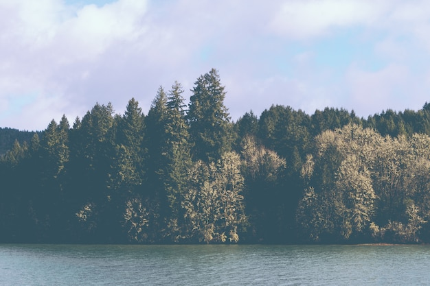 Hermoso lago al lado de un bosque