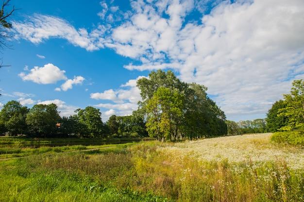 Hermoso lago con árboles en el horizonte y nubes blancas hinchadas en el cielo. tranquilo día de verano en la cabaña. grandes árboles verdes en un lago