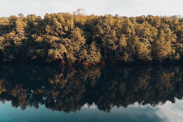 Hermoso lago y bosque de manglar.