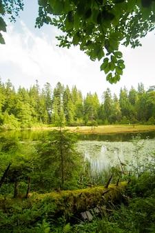 Hermoso lago en las montañas