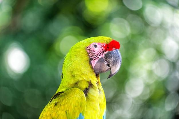Hermoso lindo pájaro divertido de loro ara de plumas rojas y verdes al aire libre sobre fondo verde natural