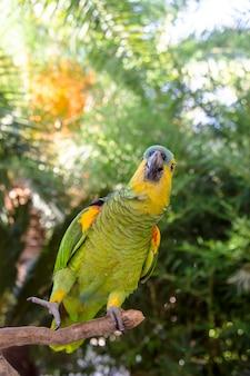 Hermoso loro amazónico verde entre ramas verdes de palmeras