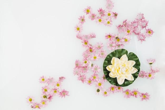 Hermoso loto y flores de color rosa en el baño de spa con leche