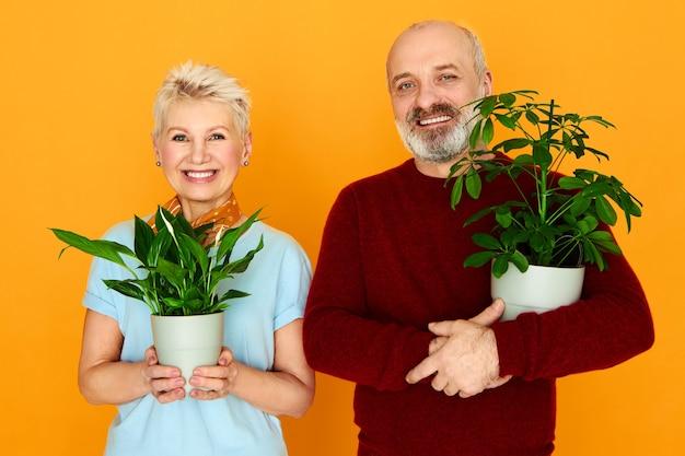 Hermoso macho senior que cultiva plantas de interior decorativas junto con su bella esposa, colocando flores verdes en macetas nuevas. belleza, naturaleza, botánica, jardinería, cuidado, frescura y concepto de personas