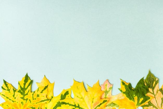 Hermoso marco de hojas de arce caídas de color verde amarillo sobre un fondo de cartón.