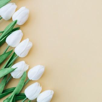 Hermoso marco con tulipanes blancos sobre fondo amarillo