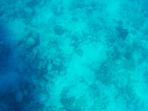 Hermoso mundo submarino del mar