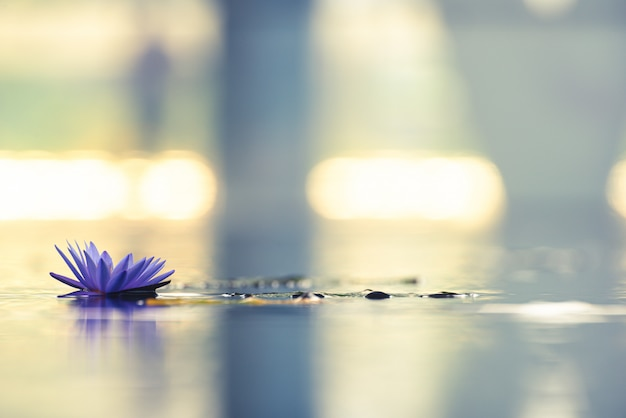 Hermoso nenúfar o flor de loto en el estanque.
