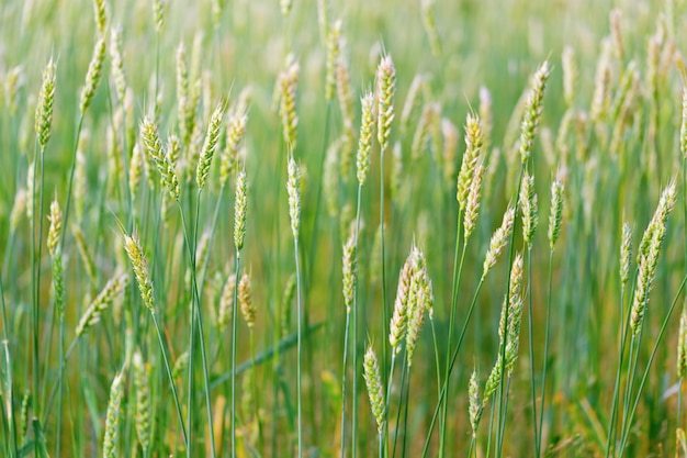 Hermoso paisaje agrícola