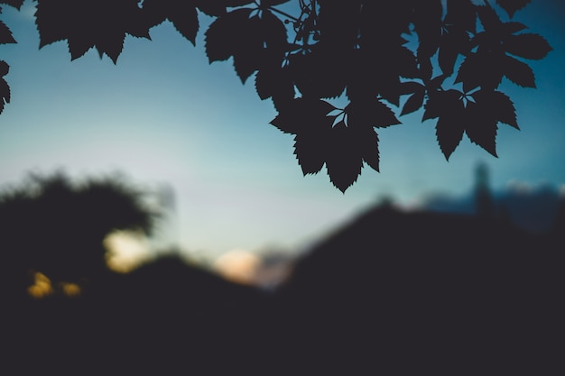 Hermoso paisaje al aire libre