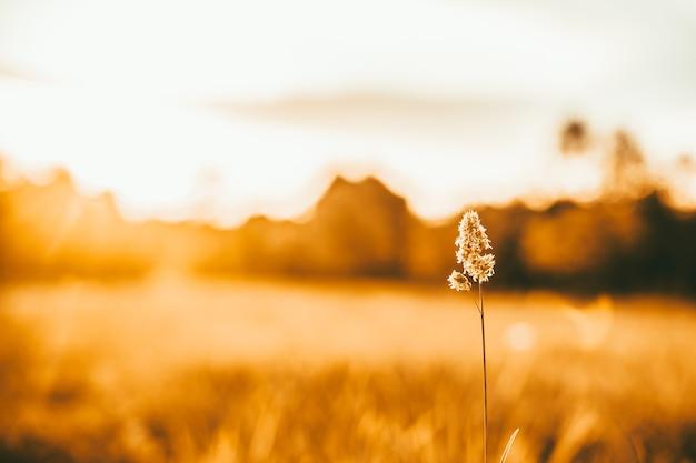 Hermoso paisaje al atardecer un campo de hierba en una hermosa luz naranja