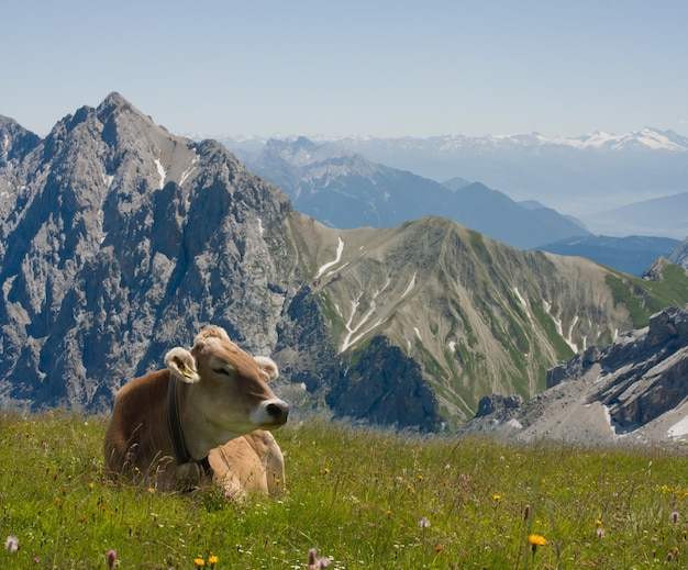 Hermoso paisaje alpino con vacas en primer plano