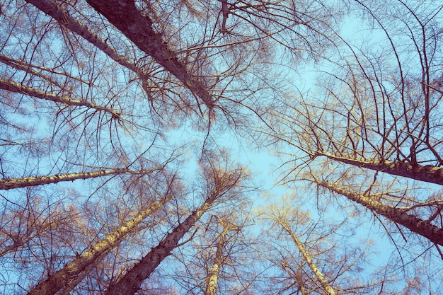Hermoso paisaje de árbol de ángel bajo y rama con fondo de cielo