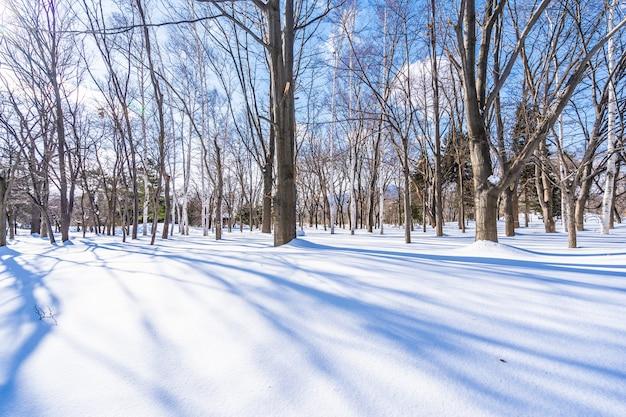 Hermoso paisaje con arbol en nieve temporada de invierno.