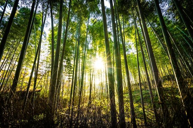 Bosque Fotos Y Vectores Gratis