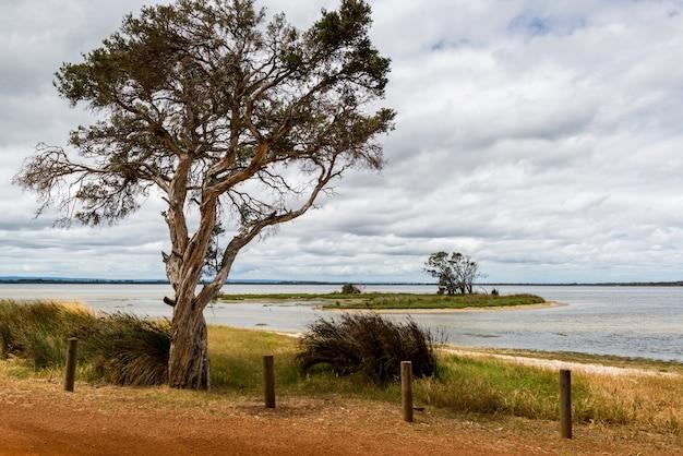 Hermoso paisaje de árboles y arbustos verdes cerca del mar bajo las nubes locas