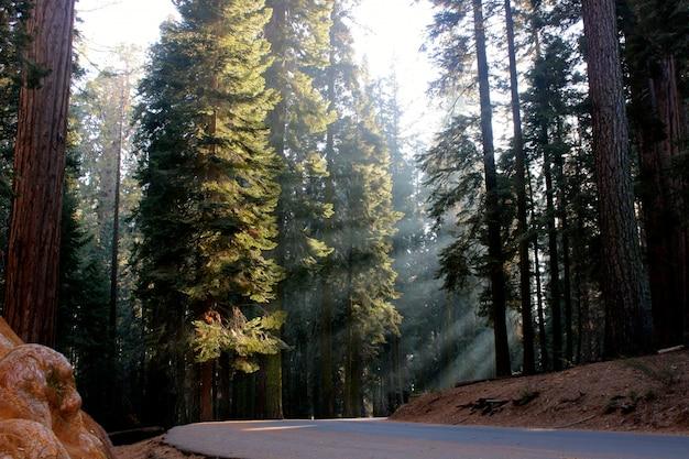 Hermoso paisaje de árboles forestales y vegetación