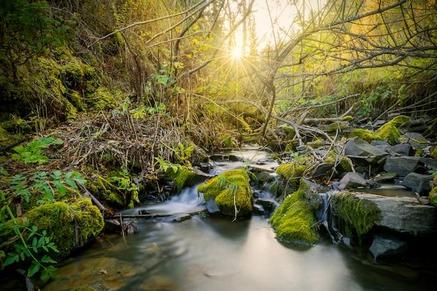 Hermoso paisaje con arroyo y rayos de sol a través de los árboles