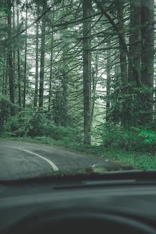 Hermoso paisaje de un bosque en el campo en un día brumoso