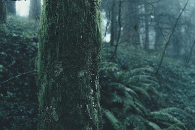 Hermoso paisaje de un bosque misterioso brumoso en un día sombrío