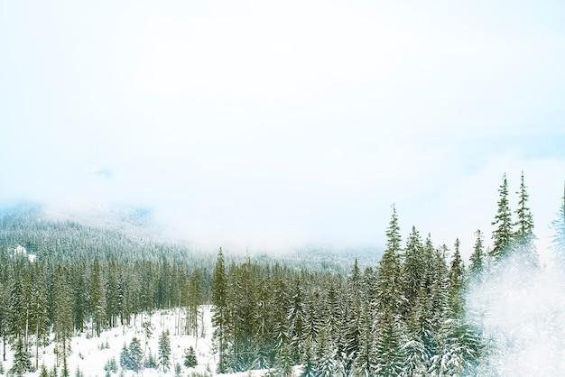 Hermoso paisaje de bosque de montaña en un día cálido y soleado