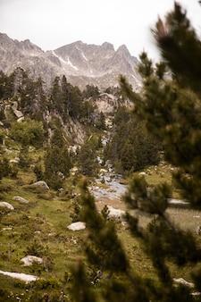 Hermoso paisaje de bosque de montaña