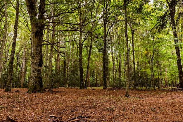 Hermoso paisaje de bosque otoñal
