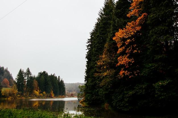Hermoso paisaje de un bosque