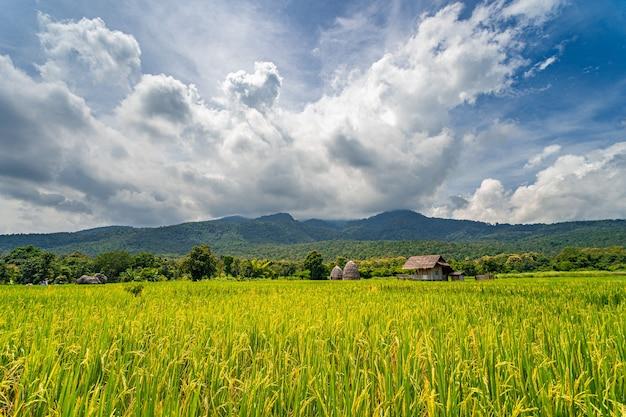 Hermoso paisaje de campo de arroz con montañas y espectacular formación de nubes en un día soleado en el norte de tailandia