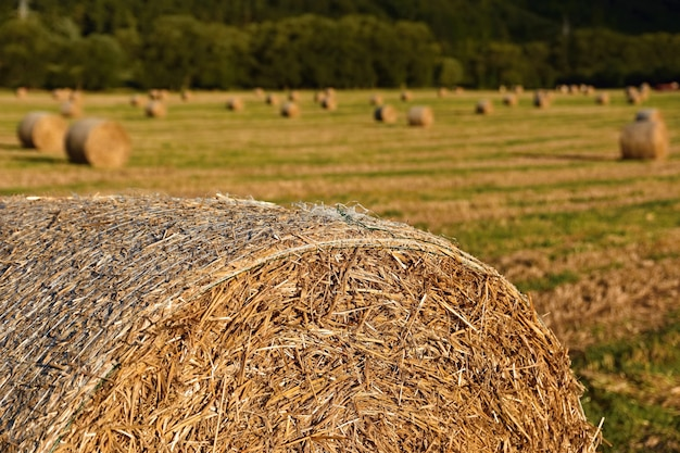 Hermoso paisaje de campo. balas de heno en los campos cosechados. república checa - europa. agricultura