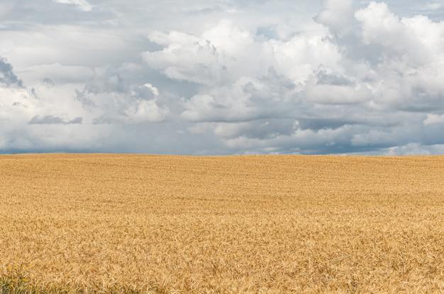 Hermoso paisaje de campo con cultivos y cielo tormentoso.
