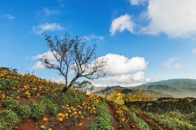 Hermoso paisaje con campo de flores en tailandia, tierras de cultivo y fondo de cielo azul