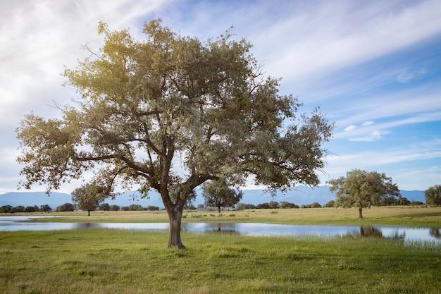 Hermoso paisaje del campo.