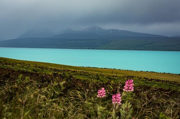Hermoso paisaje de flores silvestres de color rosa en la orilla de un lago azul claro