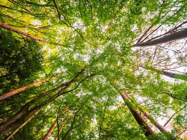 Hermoso paisaje de gran árbol en el bosque con vista de ángel bajo