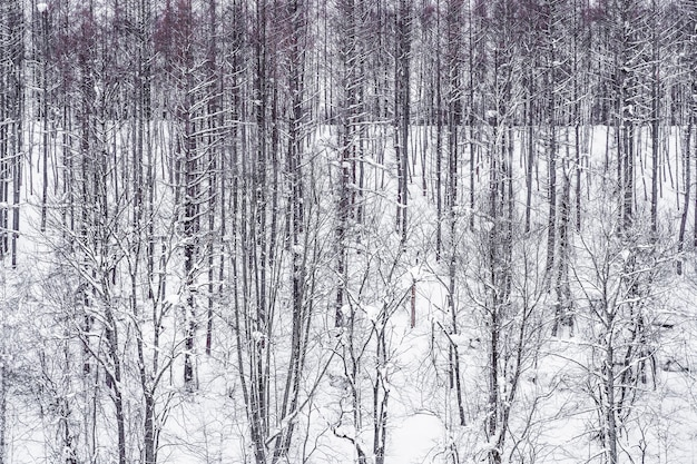 Hermoso paisaje del grupo de rama de árbol en invierno nieve