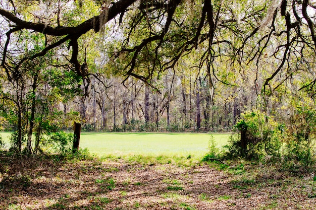 Hermoso paisaje de un increíble bosque salvaje