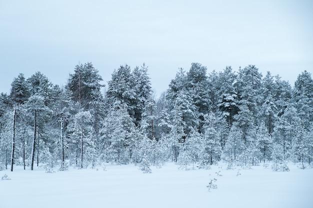 Hermoso paisaje invernal con árboles cubiertos de escarcha