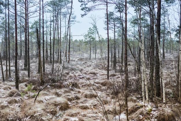 Hermoso paisaje invernal, escarcha en un pantano