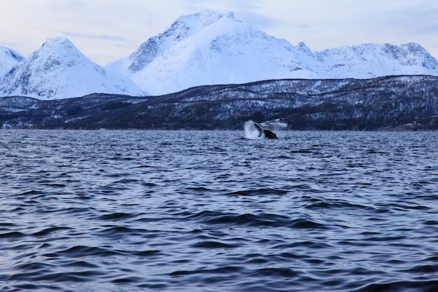 Hermoso paisaje de lago de invierno con ballenas o una orca